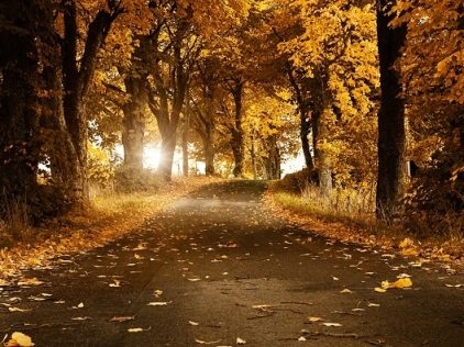 Autumn leaves decorating road